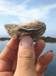 hand holding oyster