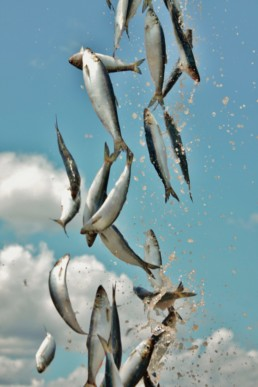 bait falling with sky in background