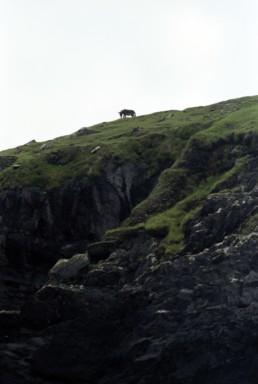 donkey on a cliff