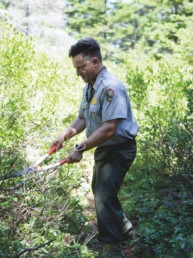 park ranger clearing trail