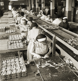 old photo of women working at sardine factory