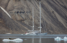 sailboat in front of rocky landscape, seal on iceburg in foreground