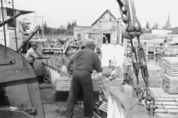 old photo of men loading lobster crates onto ferry