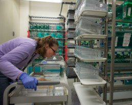 woman examines zebrafish in biological laboratory