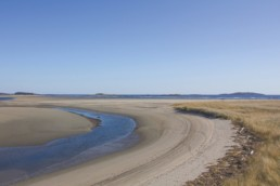 tidal pool and dune grass on a beach