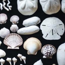 assorted seashells on black background